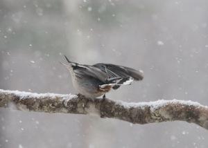 snow bird 2