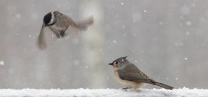 snow bird 1